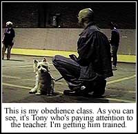 Obedience Class for Sherlock, or Tony?